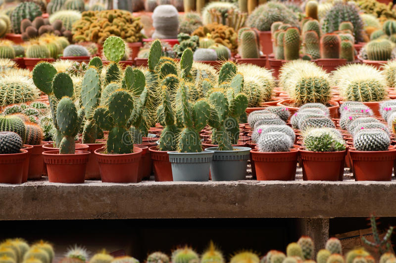 Download Various cacti stock image. Image of plant, farm, nature - 26309263