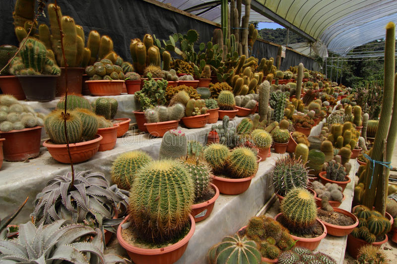 Download Various Cacti Stock Photography - Image: 26309502