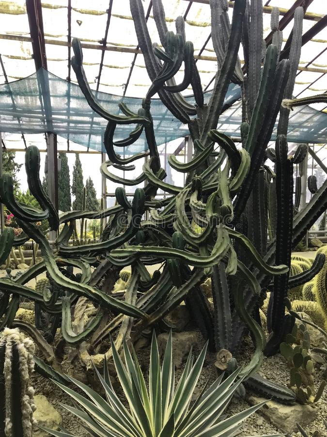 Various cactus in a glass greenhouse for protection in The Conservatory and Botanical Garden royalty free stock images