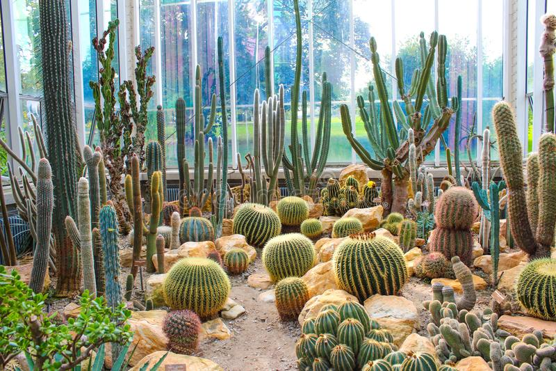 Various cactus in a glass greenhouse for protection royalty free stock photography