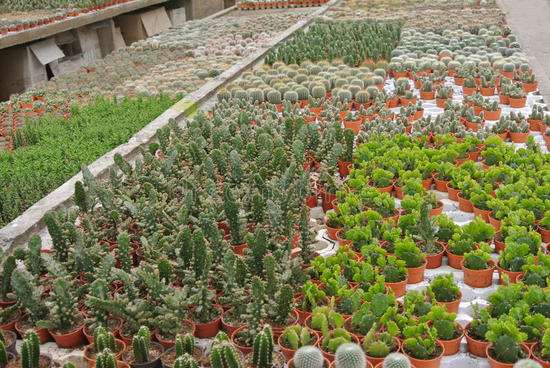 Various Cactus in the pot in Cameron Highland Malaysia stock photo