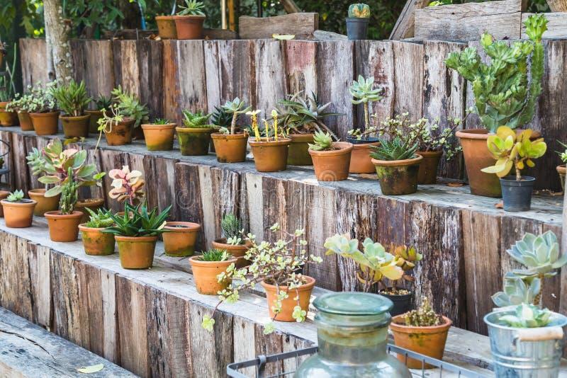 Various cactus pot on wood shelf. In garden stock photos