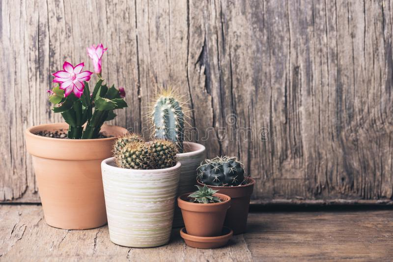Various cactus and succulent plant in clay pot on vintage wooden background. Houseplant growing hobby and spring gardening at home royalty free stock images
