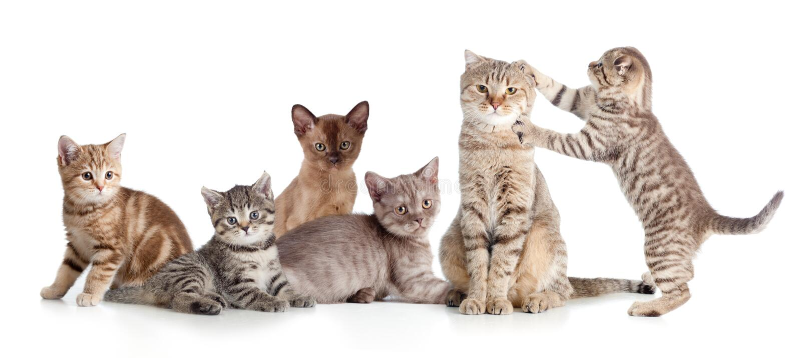 Various cats group isolated stock photo