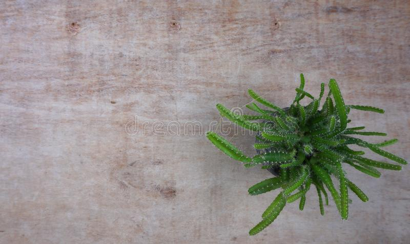 Various catus/ succulent plants in stone pots. mini house plants on wooden background with copy space for your own text stock photo