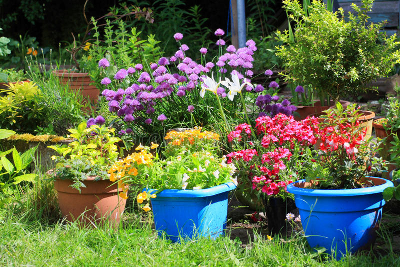 Various colorful flowers in the home garden royalty free stock photo