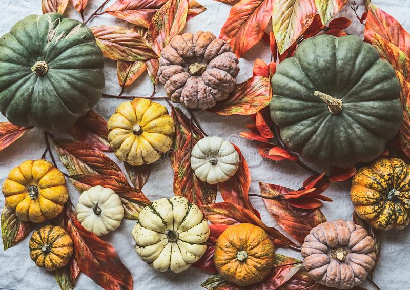 Various colorful organic farm pumpkins with autumn leaves, top view , flat lay. Fall harvest. Instagram style royalty free stock images