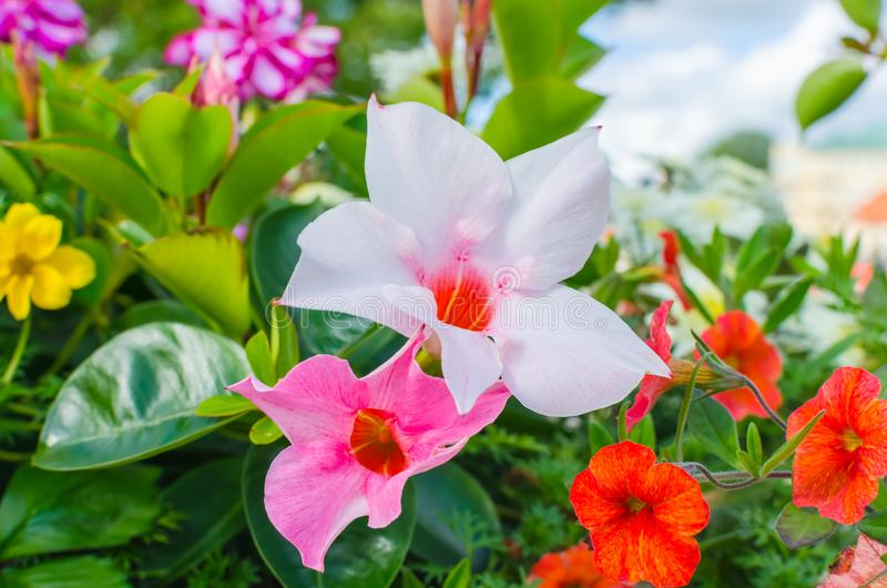 Various colourful flowers blooming in spring stock photo image of download various colourful flowers blooming in spring stock photo image of flowers pink mightylinksfo