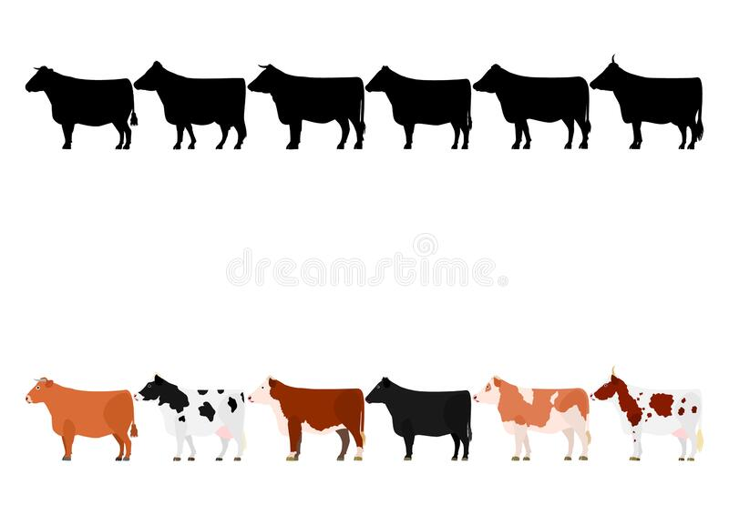 Various cows in a row. Various breeds of cow standing in a row, set of cows color image and silhouette image stock illustration