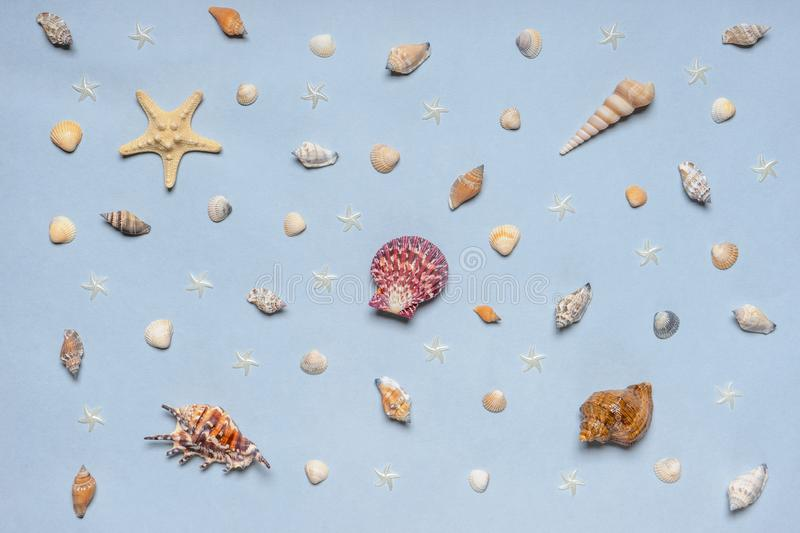 Various decorative nautical items, seashells, sea stars on blue pastel background. Sea travel, summer vacation at ocean concept. royalty free stock photography