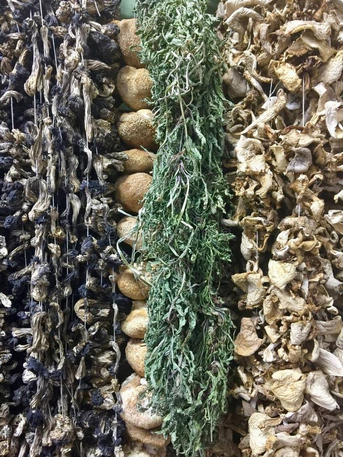 Various dried mushrooms stock image