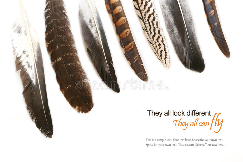 Various feathers isolated on white background, sample text. Various feathers isolated on white background, may be metaphor for cultural diversity in the world stock photography