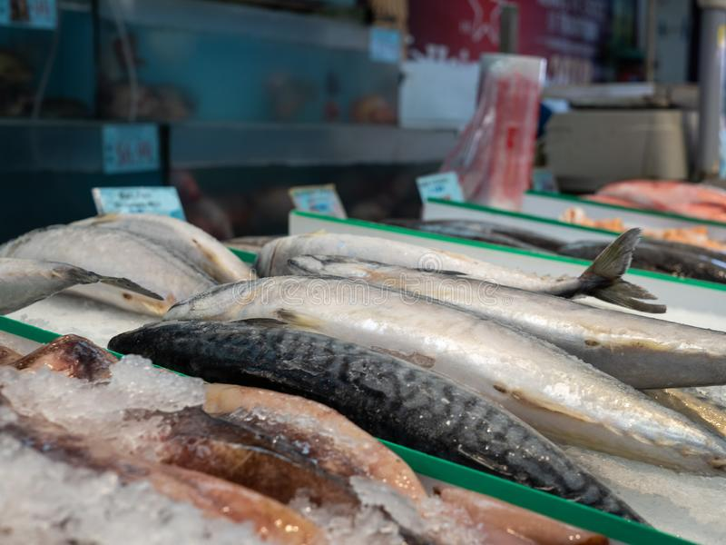 Various fish sitting on ice in grocery store seafood section for purchase. Various fish sitting cold on ice in grocery store seafood section for purchase stock image