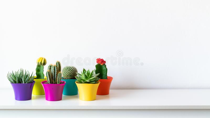 Various flowering cactus and succulent plants in bright colorful flower pots against white wall.House plants on white shelf banner royalty free stock photo