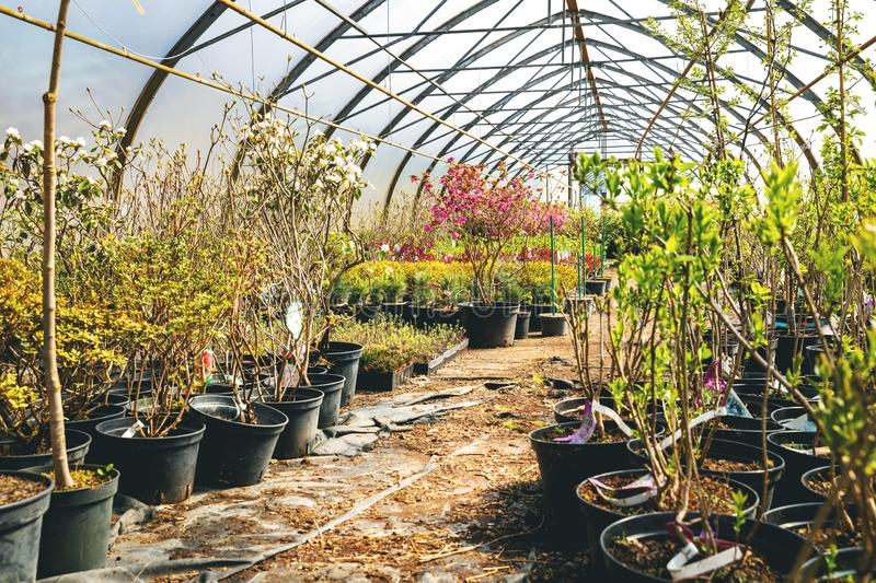 Various flowers and plants in nursery greenhouse. Store royalty free stock photos