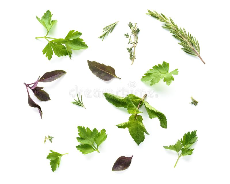 Various fresh herbs collection isolated on white background royalty free stock photo