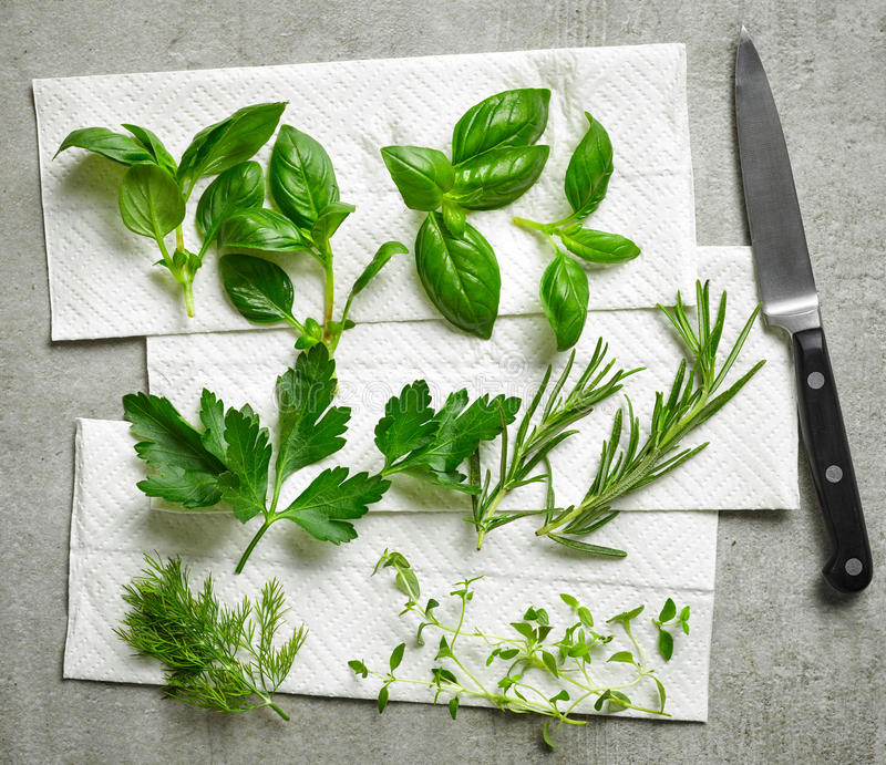 Various fresh herbs stock images