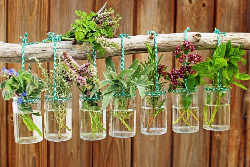 Various fresh herbs stock image