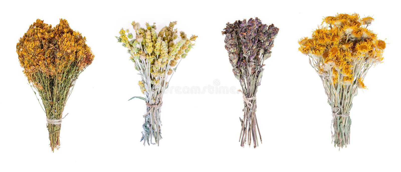 Various fresh magic herbs hanging isolated on white background. stock photos