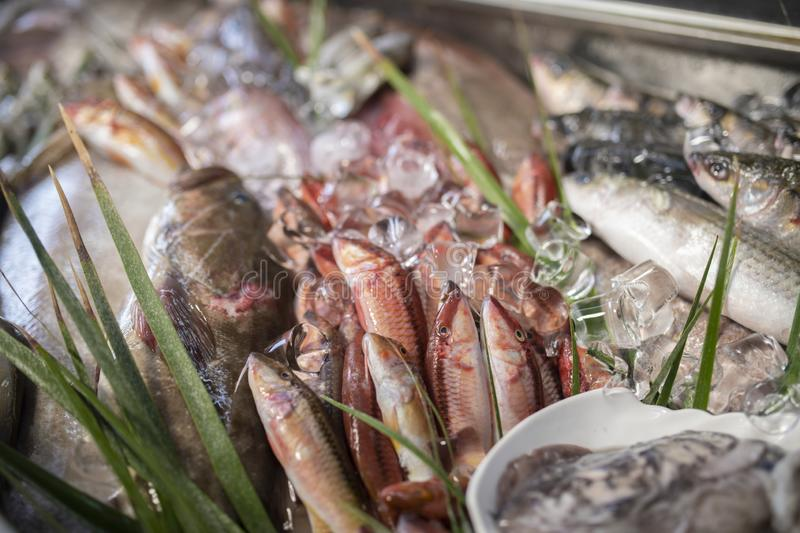 Various fresh seafood and fishes in fish market. Lobster, octopus, red mullet, boops boops, sea bass, sea bream, white grouper, prawns and various fresh seafood stock images