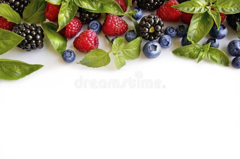 Various fresh summer berries on white background. Ripe raspberries, blackberries, blueberries, mint and basil leaves. stock images