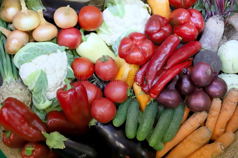 Various freshly picked  harvested vegetables stock photography