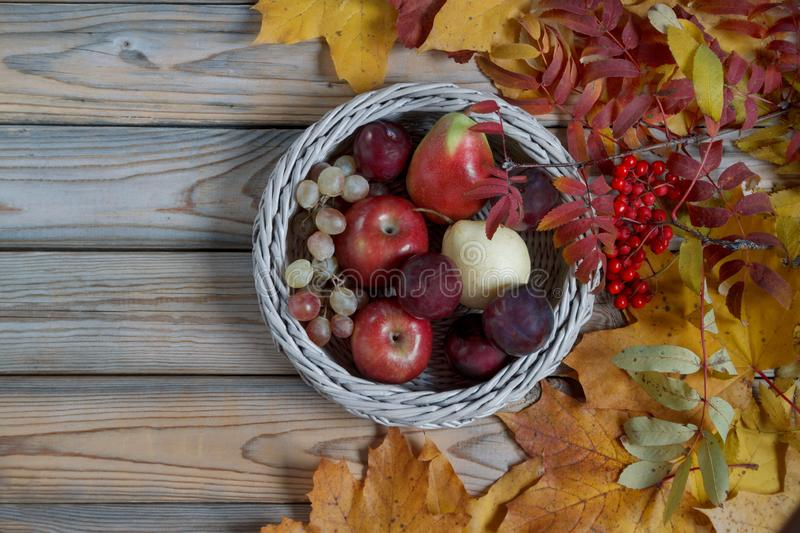 Various fruits are lying in a wicker basket. Autumn still life. Copy space for your text. royalty free stock photos