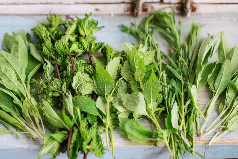 Various of garden herbs royalty free stock photo