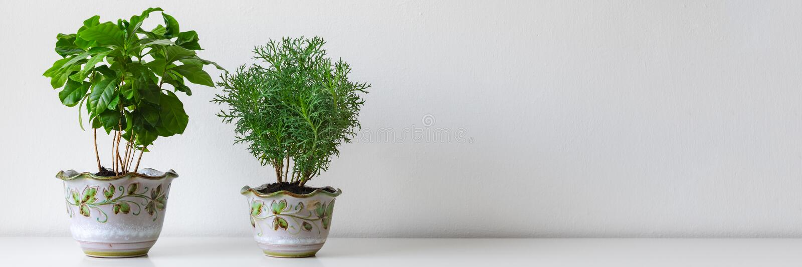 Various house plants in different pots against white wall. Indoor potted plants background. Modern room decoration. Various house plants in different pots royalty free stock images
