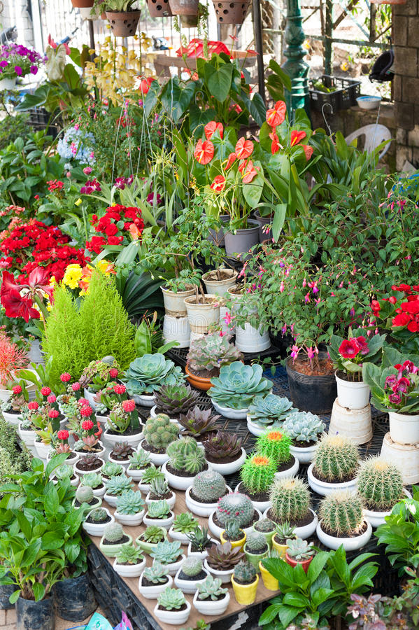 Various Indoor Plants For Sale Stock Image - Image of ...