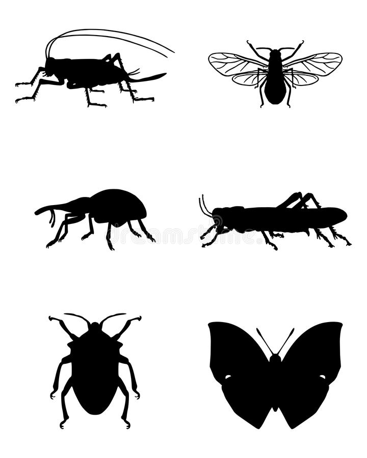 Various insects. Detailed and accurate illustration of various insects stock illustration