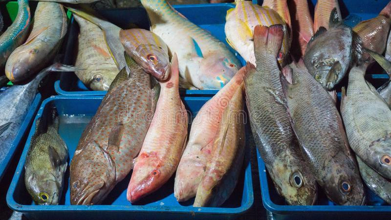 Various kind of fish sell on traditional market in indonesia royalty free stock photos