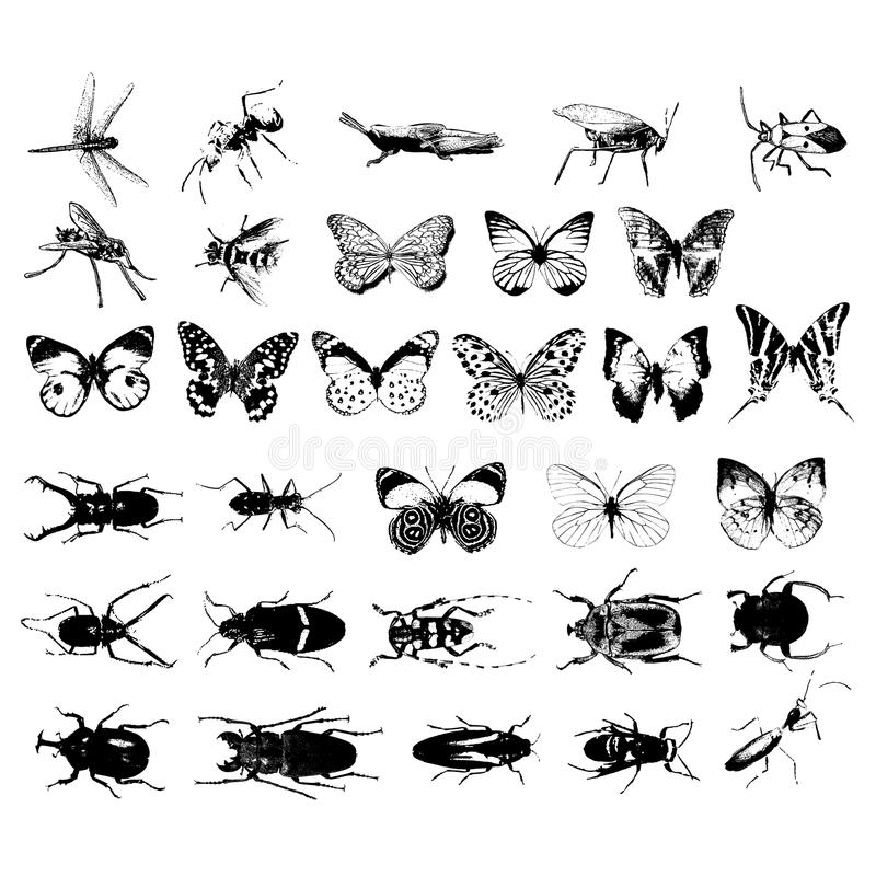 Various kind of insects stock illustration