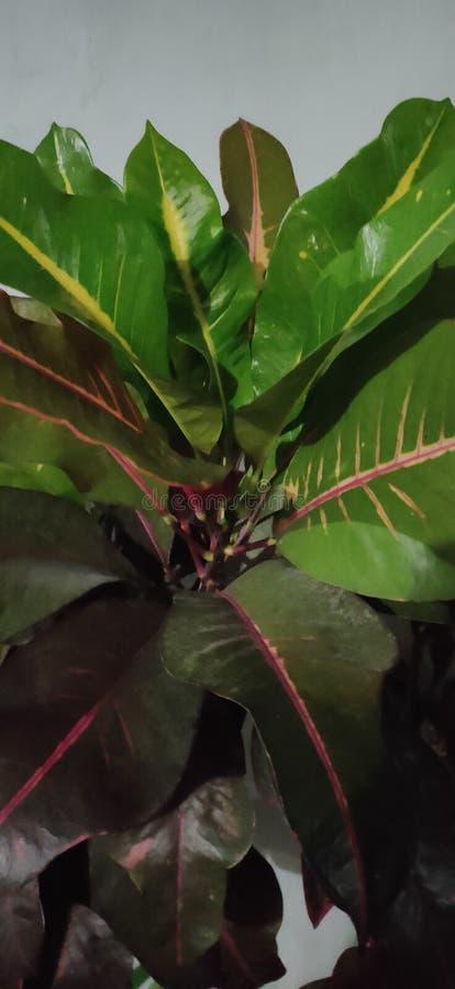 Various kind of natural green leaf stock image