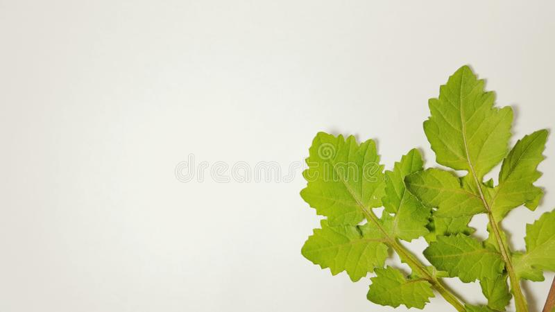 Various leaves of plants in isolated mode. Natural texture, suitable for use as educational material or background images royalty free stock image