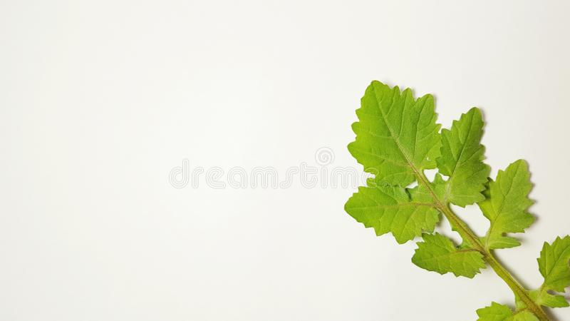 Various leaves of plants in isolated mode. Natural texture, suitable for use as educational material or background images stock photography
