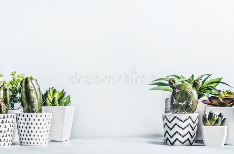 Various little succulent plants with cactus und aloe vera in modern pots on light table at blank wall background. Urban indoor stock photos