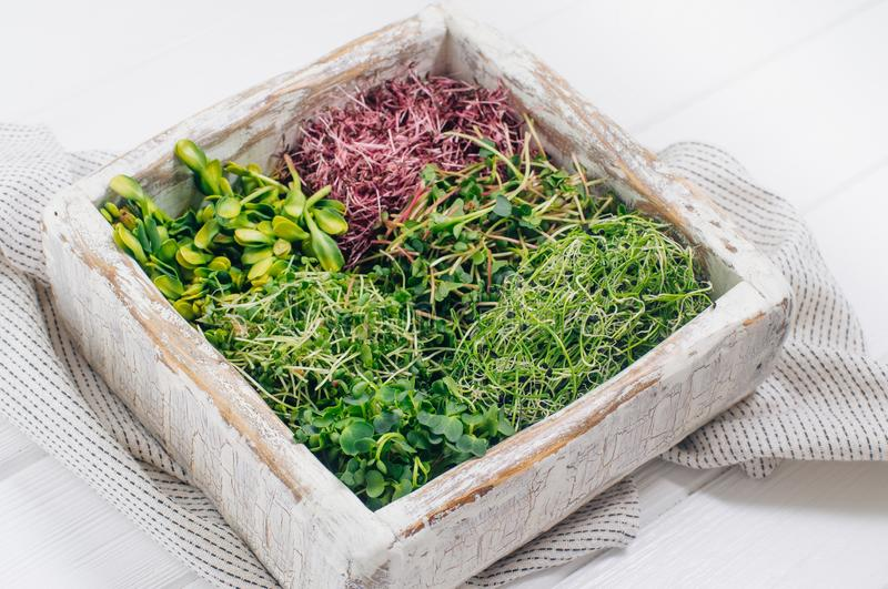 Various micro greens sprouts in wooden box stock image