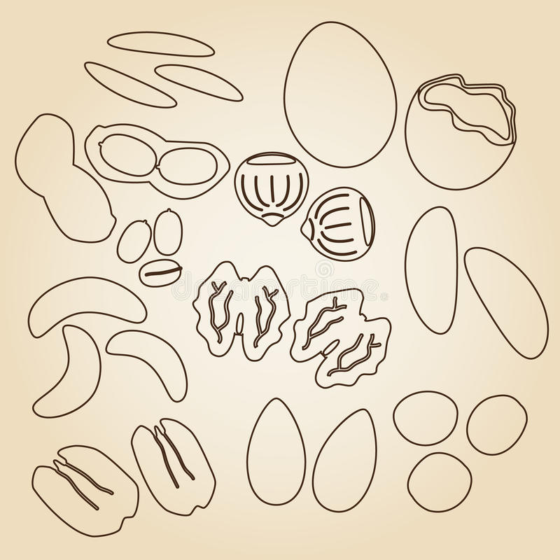Various nuts types brown outline icons set eps10 stock illustration