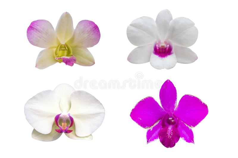 Various orchids, isolated on white background with with clipping royalty free stock photo