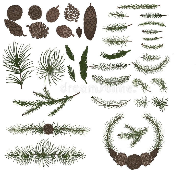 Various pine,spruce branches ,cones royalty free illustration