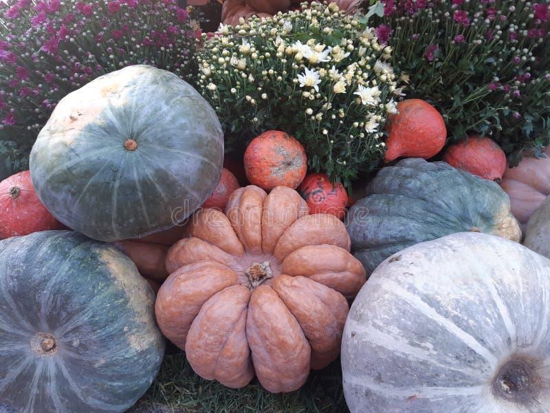 Autumn harvest. royalty free stock photos