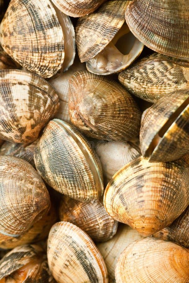 Various raw clams royalty free stock photos