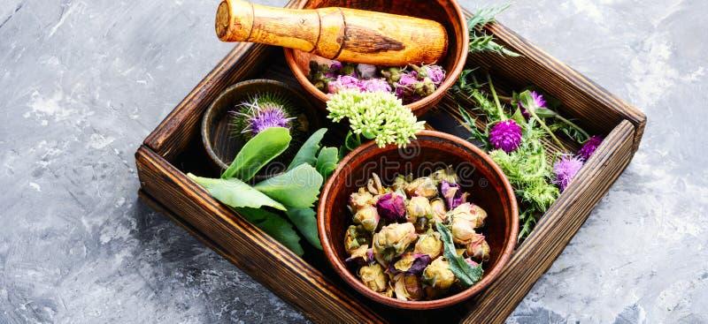 Alternative herbal medicine royalty free stock images