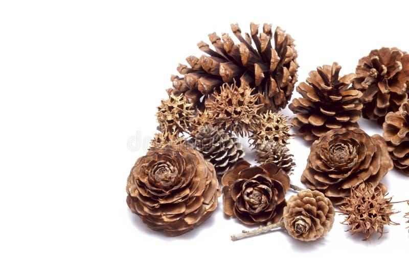 Various seeds stock photos
