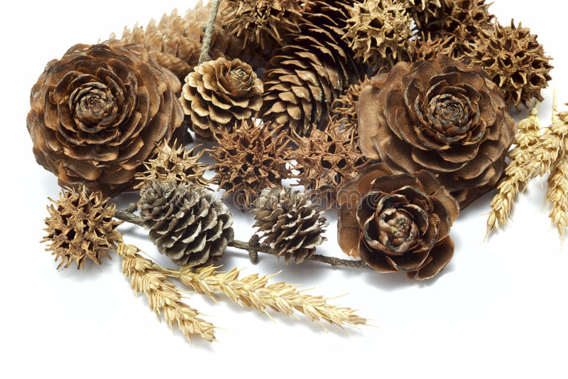 Various seeds stock photography