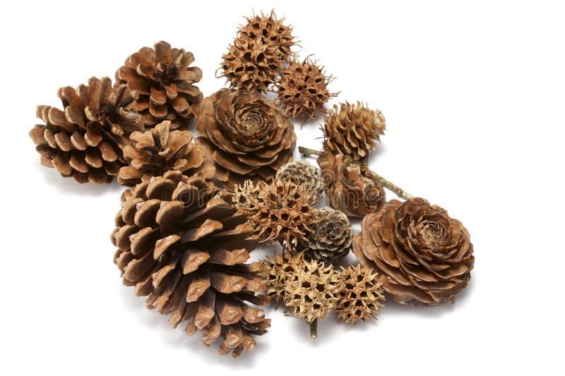 Various seeds stock image