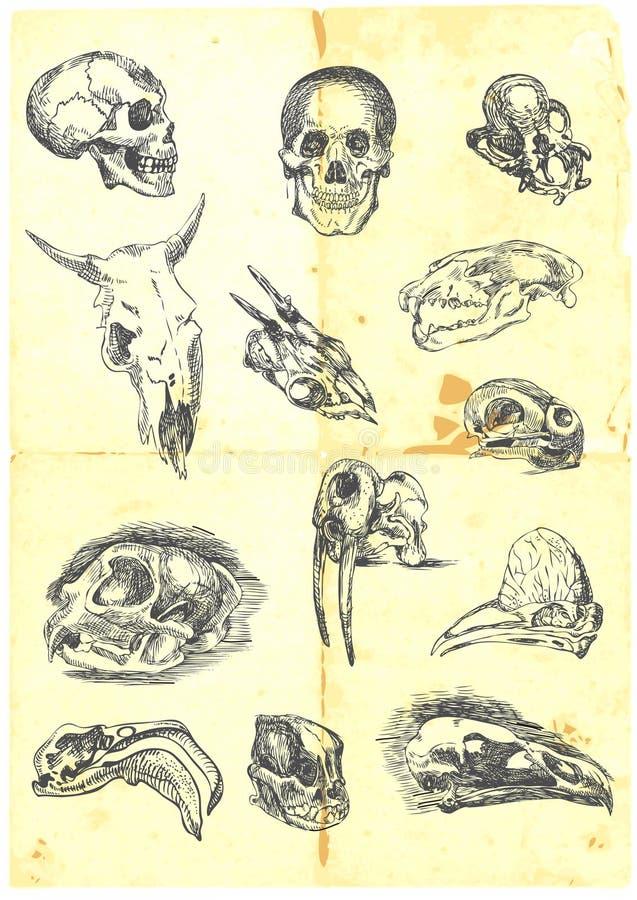 Download Various Skulls Stock Photos - Image: 23413853