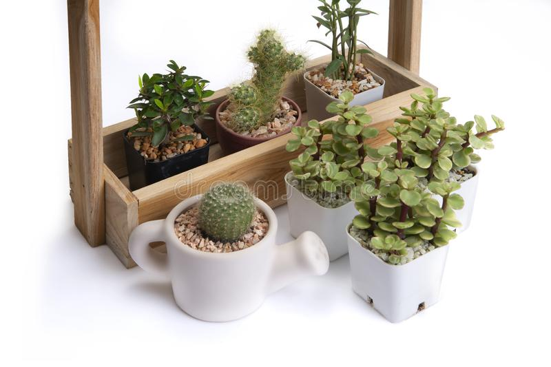 Various of small cactus in difference jardiniere royalty free stock image