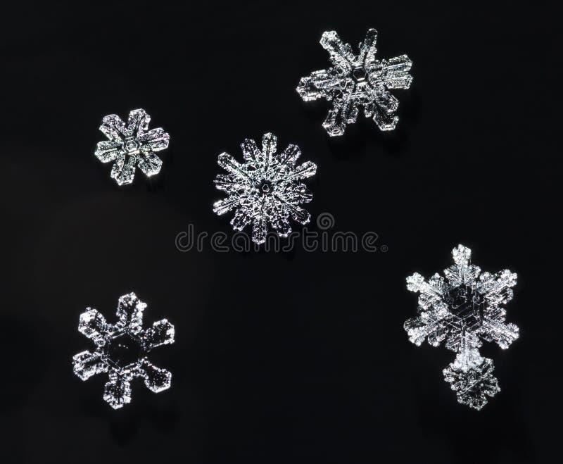 Various Snowflakes royalty free stock photos